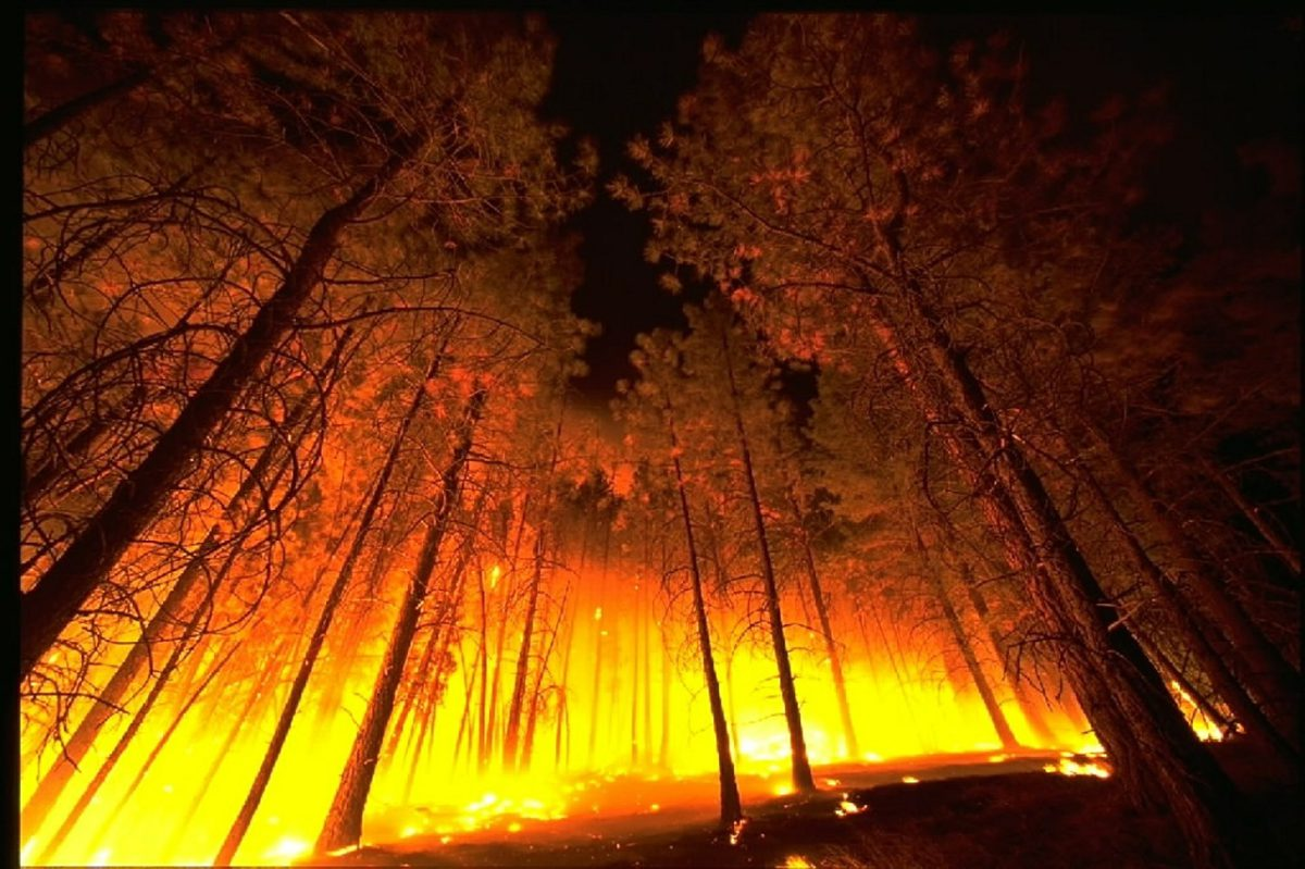 Wildfire with trees